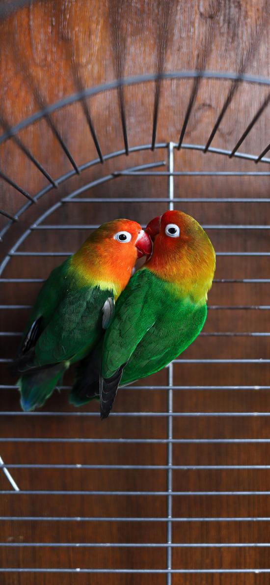 鳥類 飼養 鸚鵡 學文