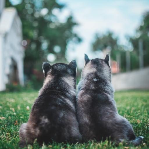 小狗 背影 宠物 草地