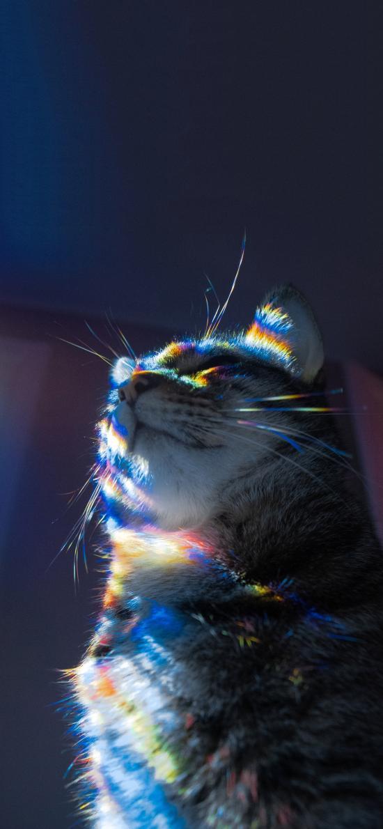 寵物 貓咪 喵星人 彩虹光