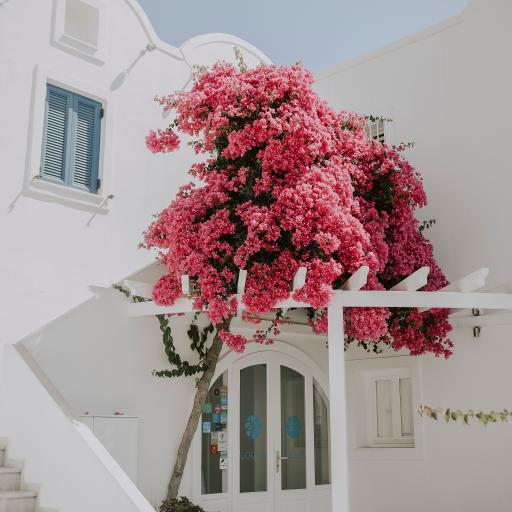 建筑 白色 花季 庭院