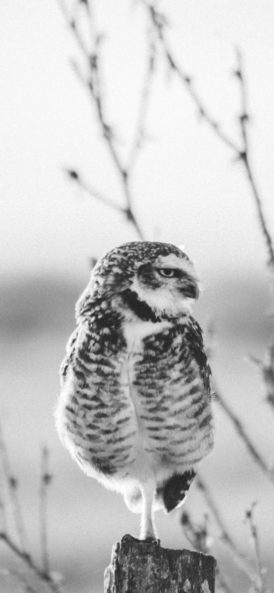 貓頭鷹 夜視 站立 鳥類