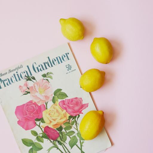 柠檬 水果 新鲜 杂志