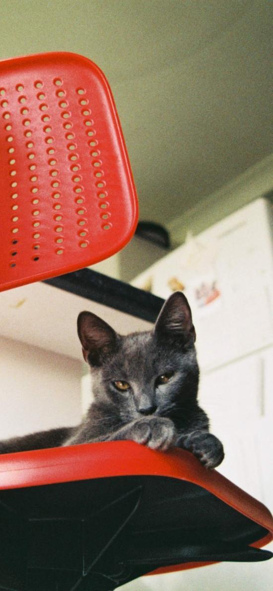 椅子 寵物 貓咪 喵星人