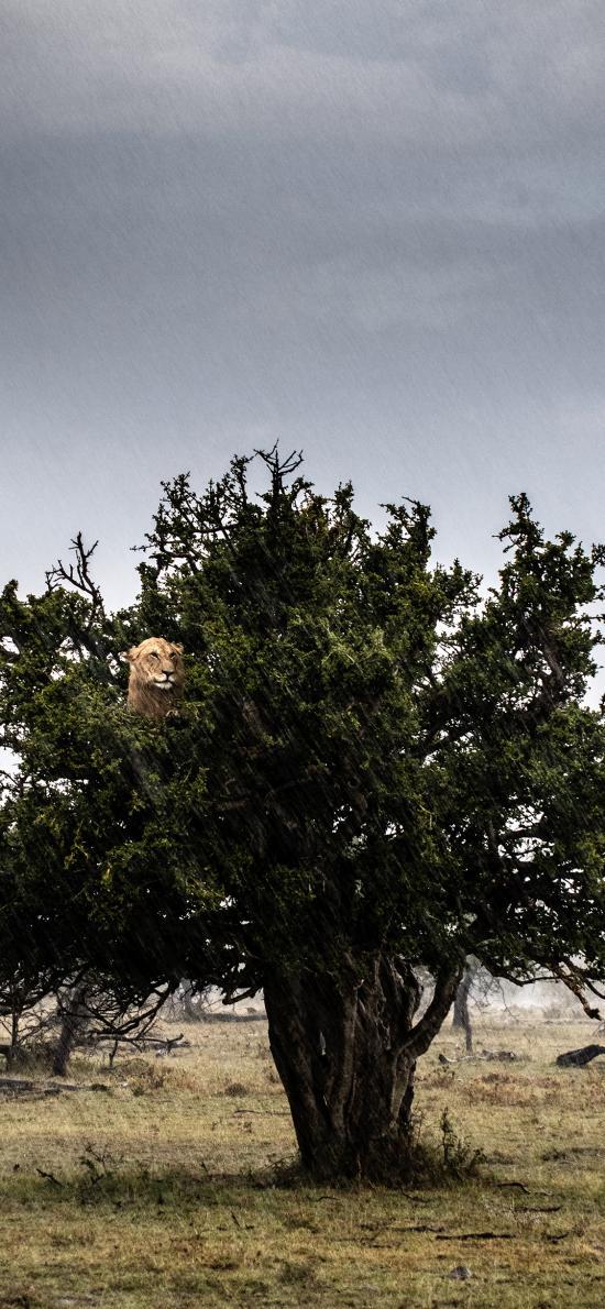 树木 猎豹 树枝 野外