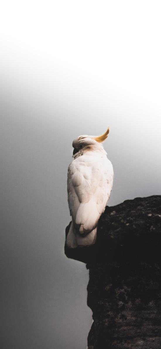懸崖 飛鳥 鸚鵡 白色