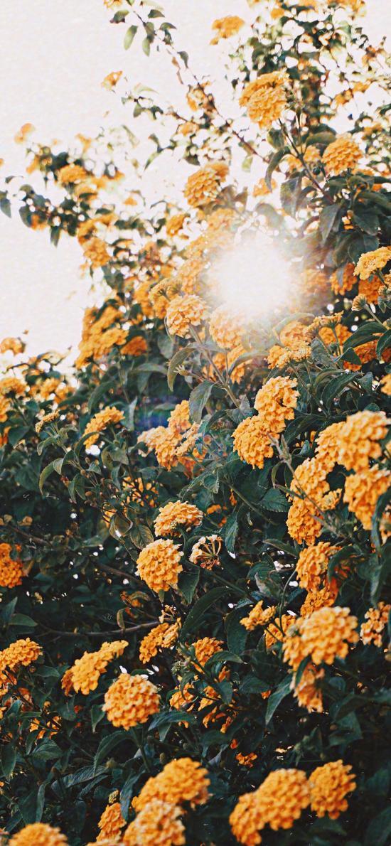花季 盛開 枝頭 花簇