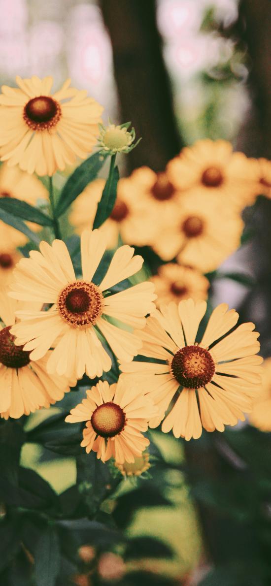 鮮花 盛開 花季 黃花