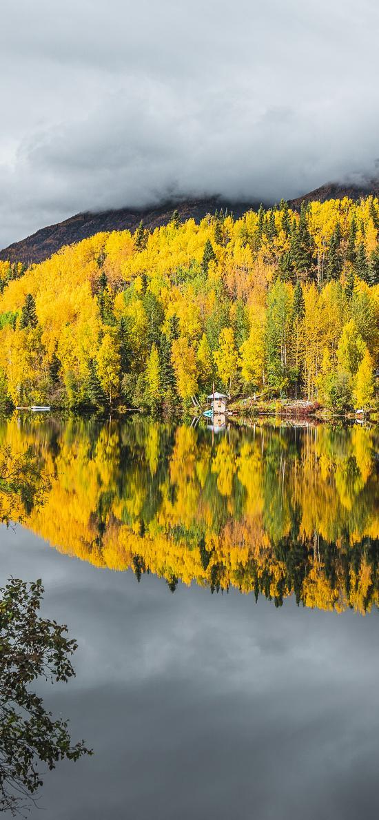 自然 美景 树木 黄色