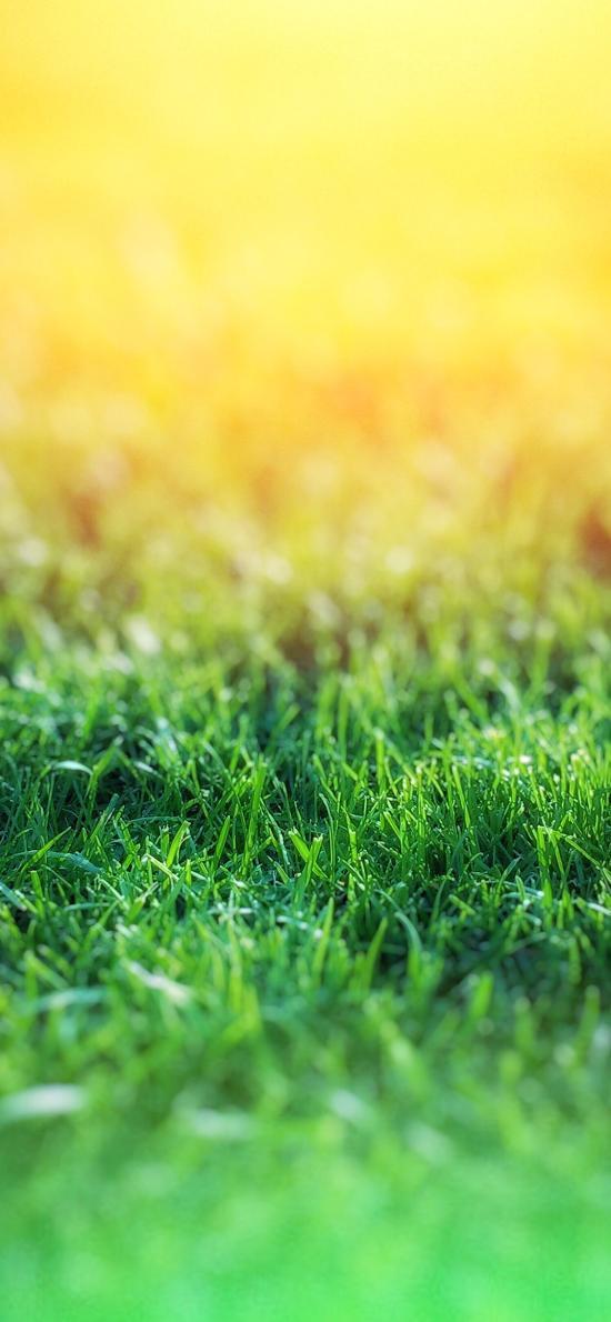 草地 碧绿 草坪