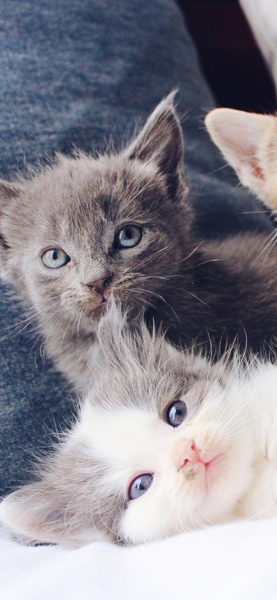 貓咪 寵物 可愛 幼仔