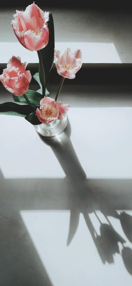 鮮花 盛開 花瓶 光影