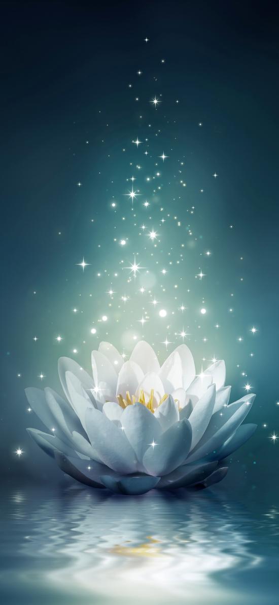 蓮花 唯美 美圖 花朵