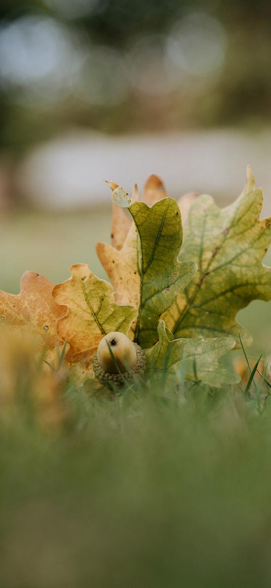 草地 树叶 落叶 榛子