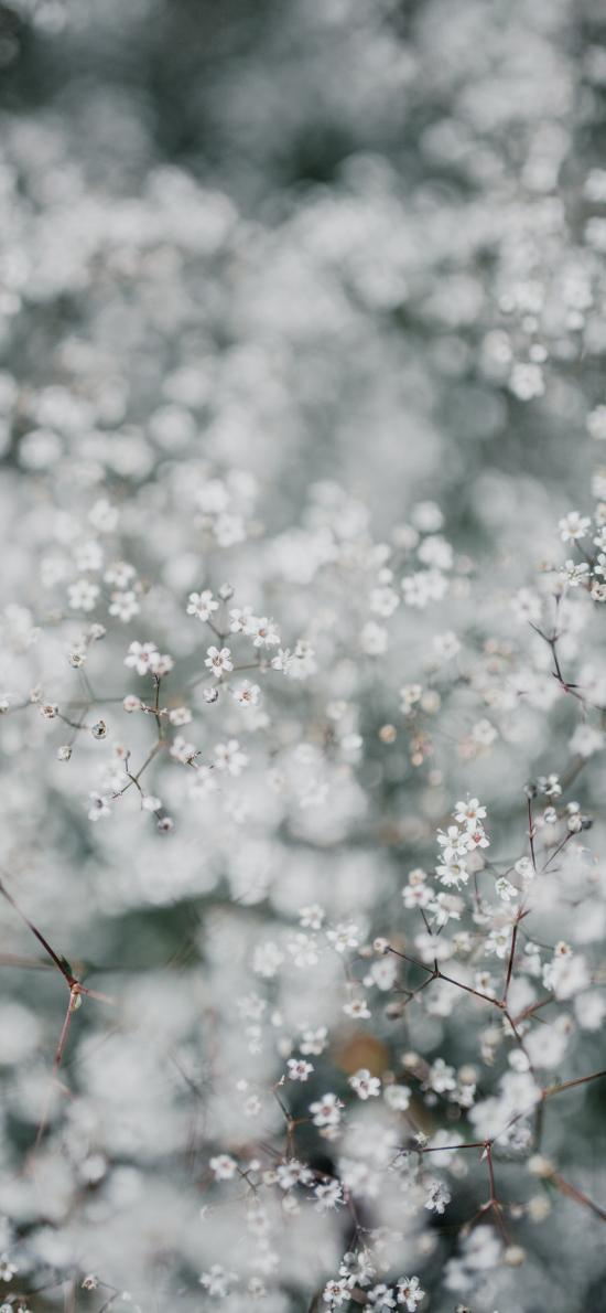鮮花 滿天星 白色 純潔
