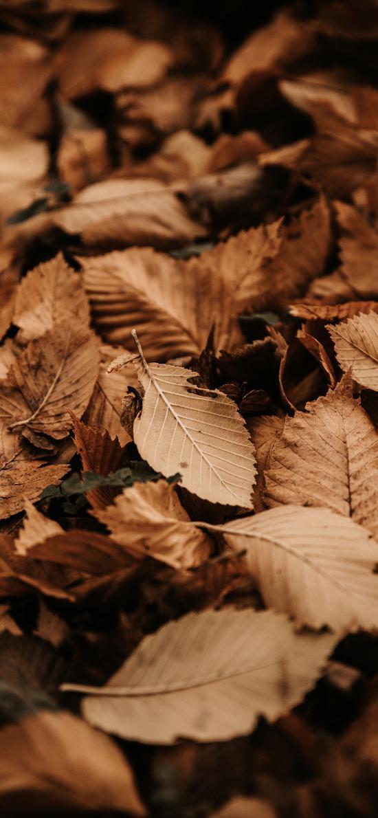 枯葉 枯黃 落葉 堆積