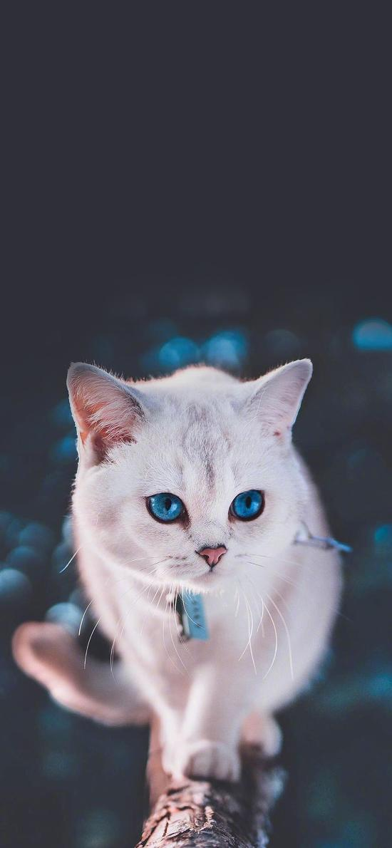 貓咪 寵物 項圈 瞳孔