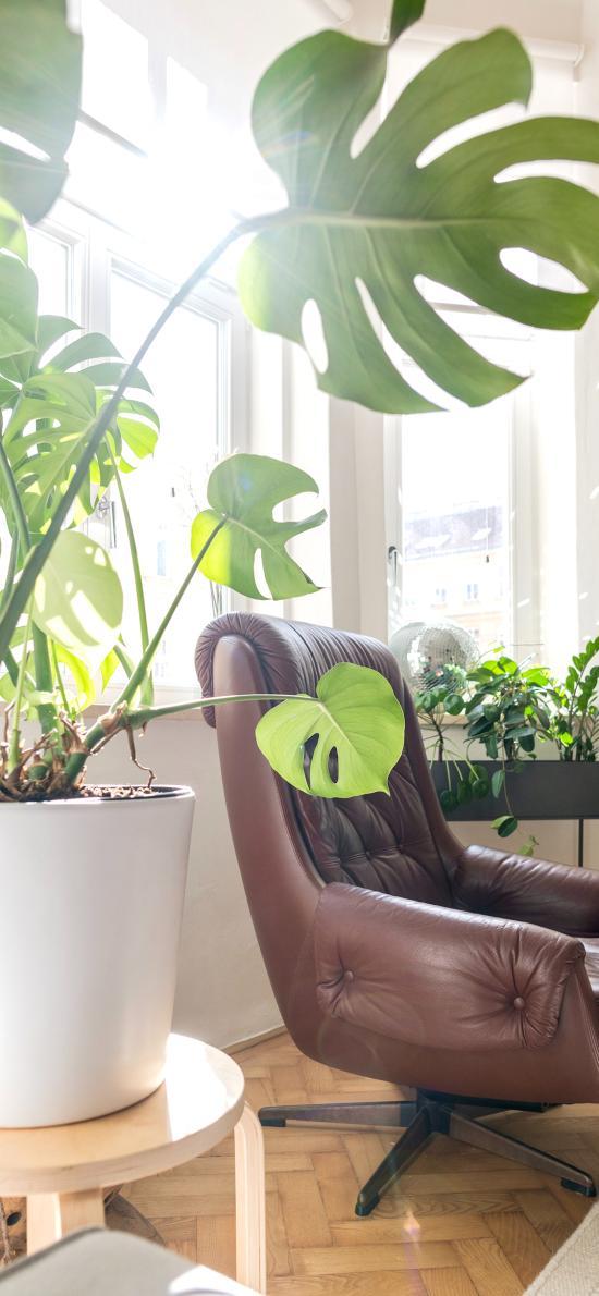 家居 椅子 盆栽 龜背竹