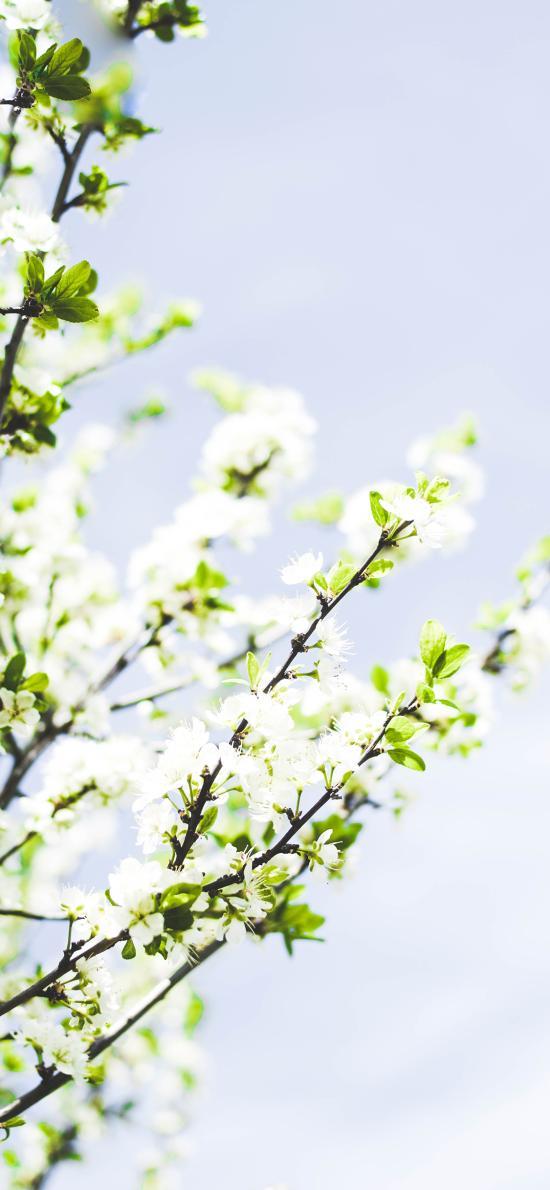 花季 盛開 枝葉 鮮花