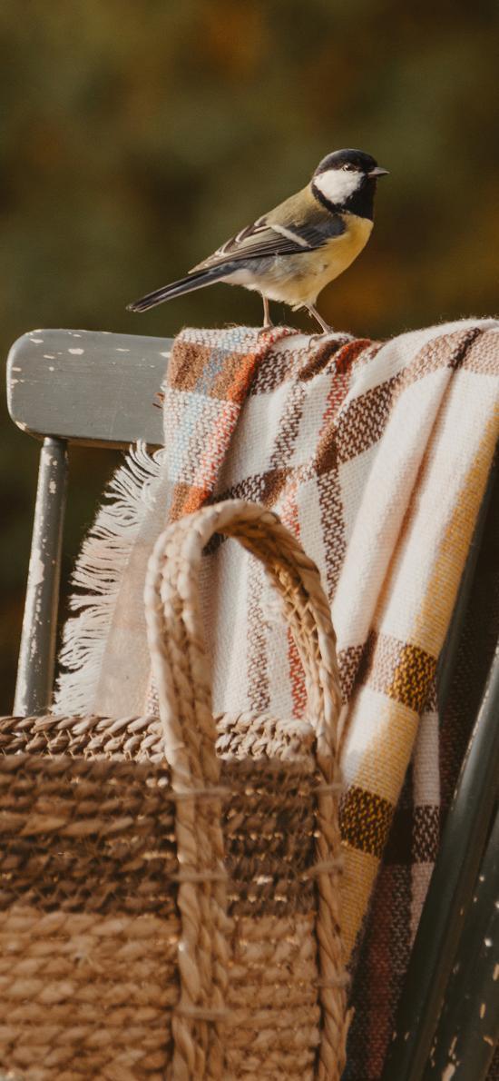 小鳥 站立 椅子 野外  編織籃