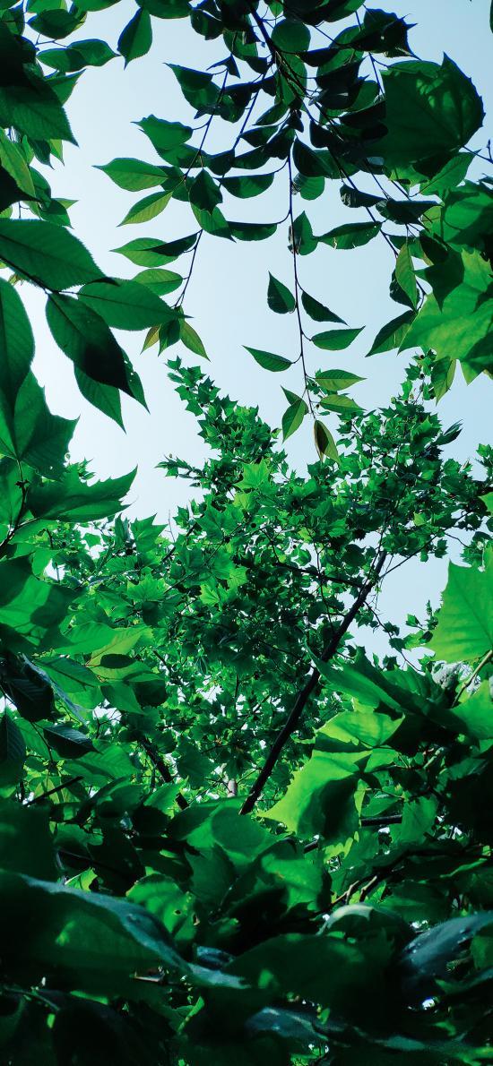 樹葉 枝葉 綠植 茂密