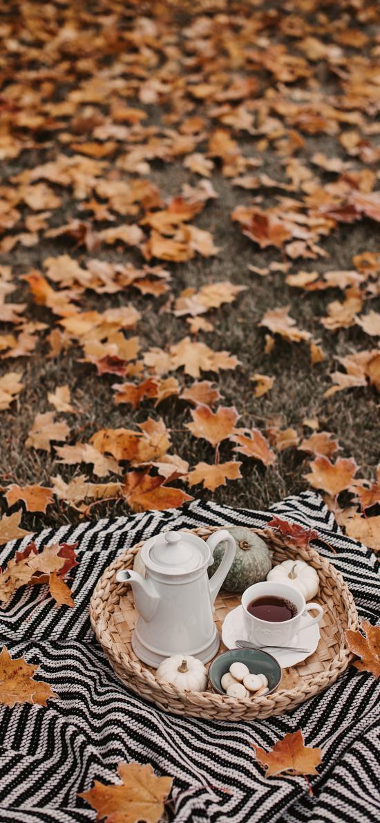 枫叶 落叶 草地 野餐 茶水 南瓜