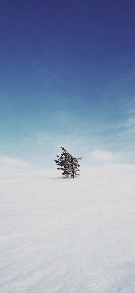 树木 雪地 荒芜 天空 蔚蓝