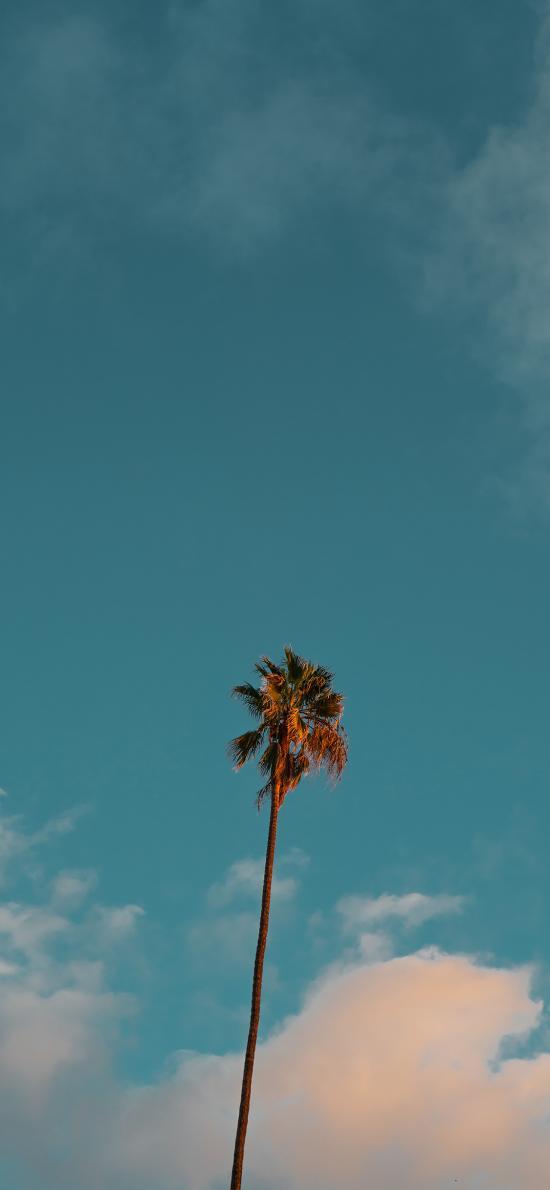 椰樹 天空 云彩 藍天