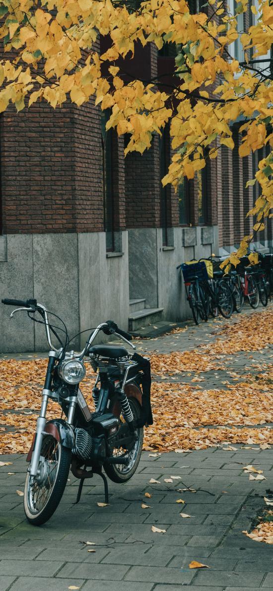 街景 摩托车 机车 落叶