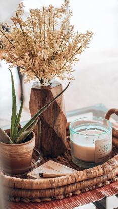 静物 蜡烛 盆栽 干花 芦荟
