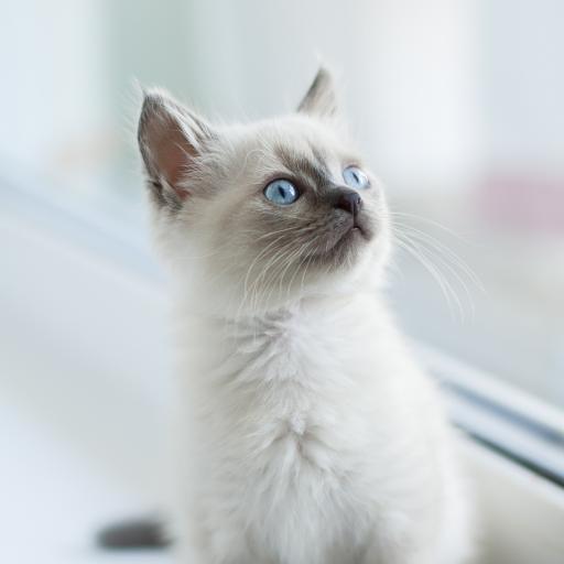 猫咪 幼仔 可爱  宠物