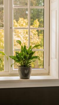 绿萝 窗台 窗户 绿植