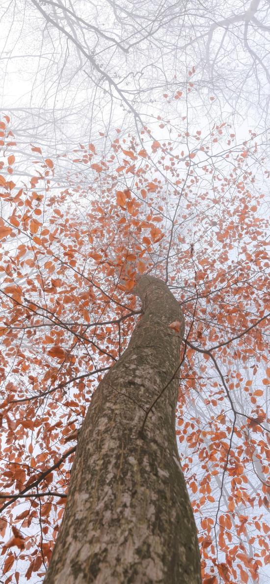 樹木 枝葉 枯黃 秋季 唯美