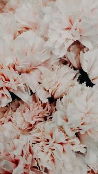 鲜花 花束 花朵