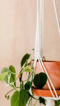 花盆 家居 盆栽 绿植