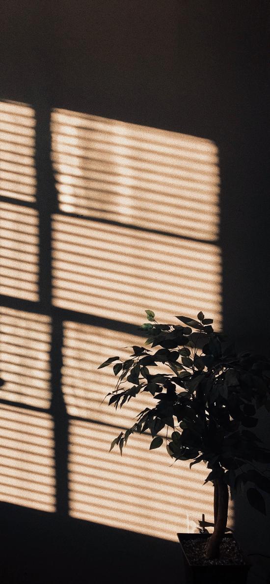 家居 陽光 盆栽 影子 意境