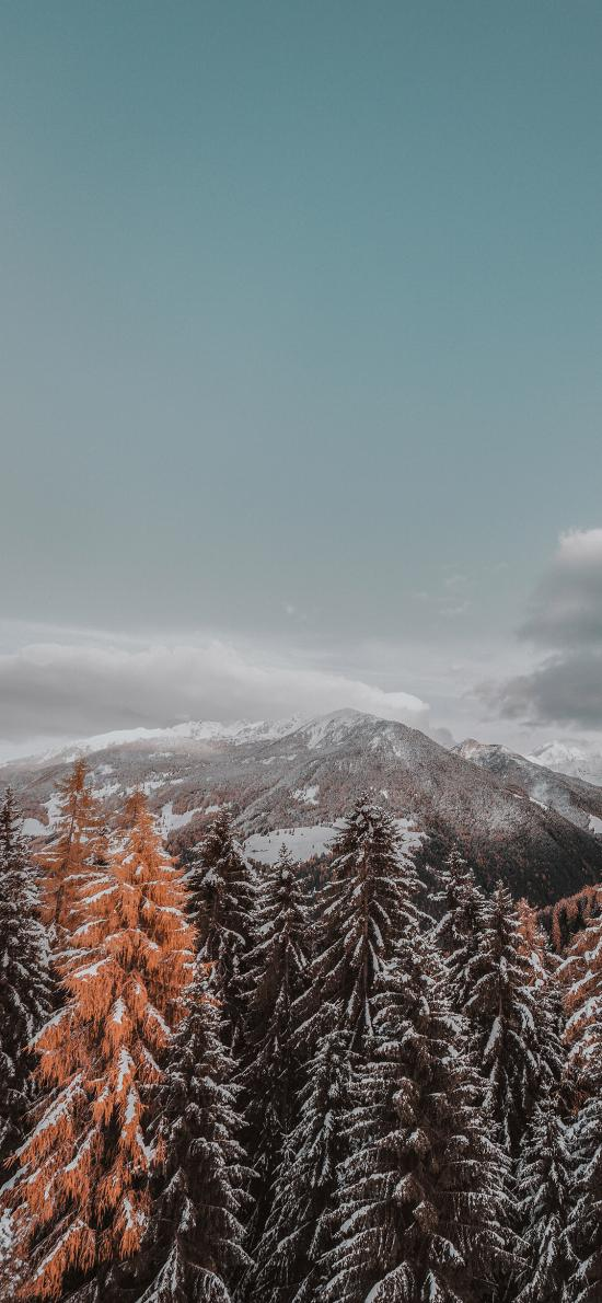 自然 山峰 樹林 白雪 冬季