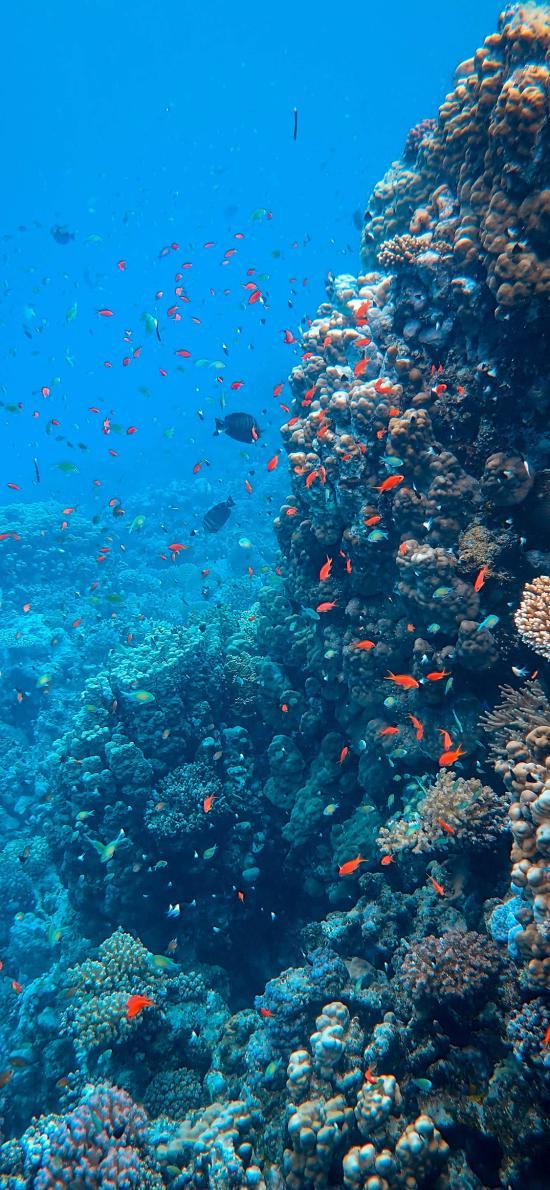 珊瑚 珊瑚虫 鱼群 珊瑚礁