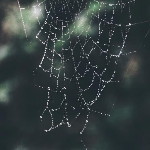蜘蛛网 网丝 水珠 自然