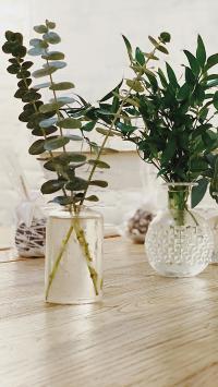 家居 花瓶 插花 尤加利叶 观赏 绿化