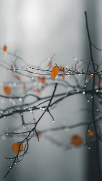 树木 枯枝 叶子 枯黄 水珠
