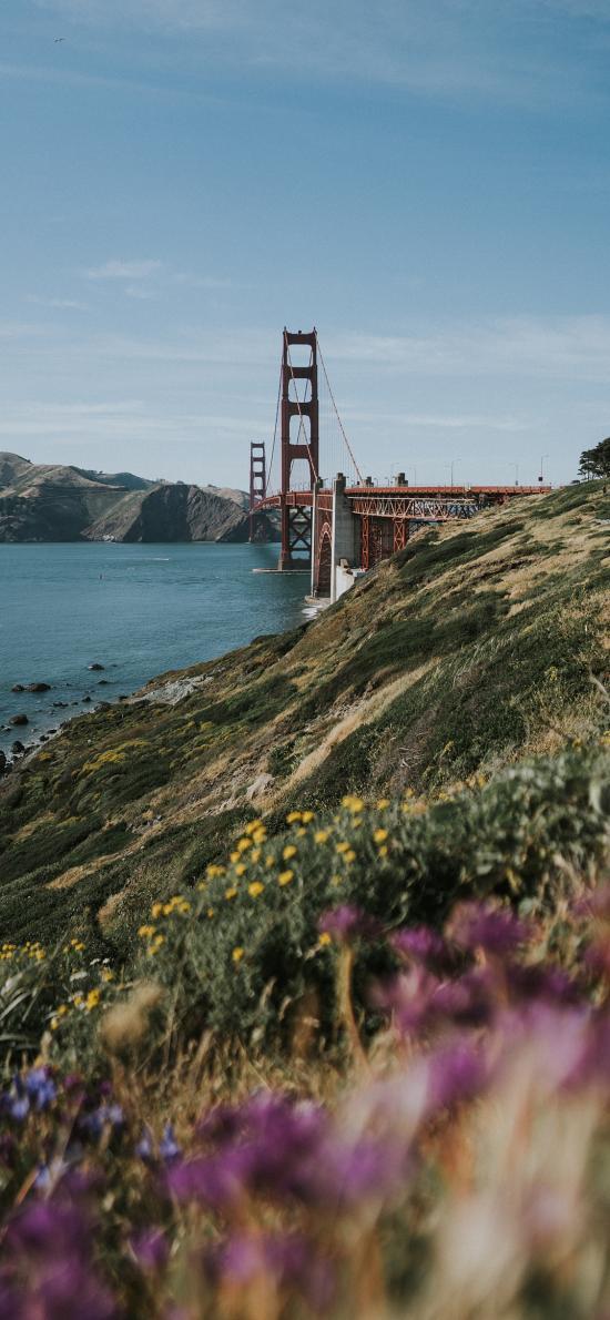 郊外 草坪 鮮花 美景 金山大橋
