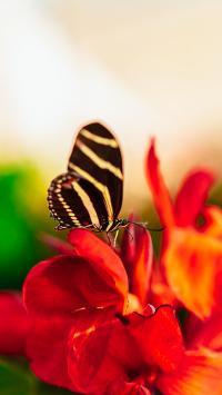 蝴蝶 花朵 鲜花 昆虫