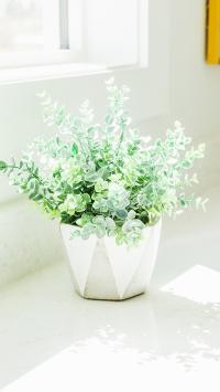 窗台 盆栽 绿化 阳光