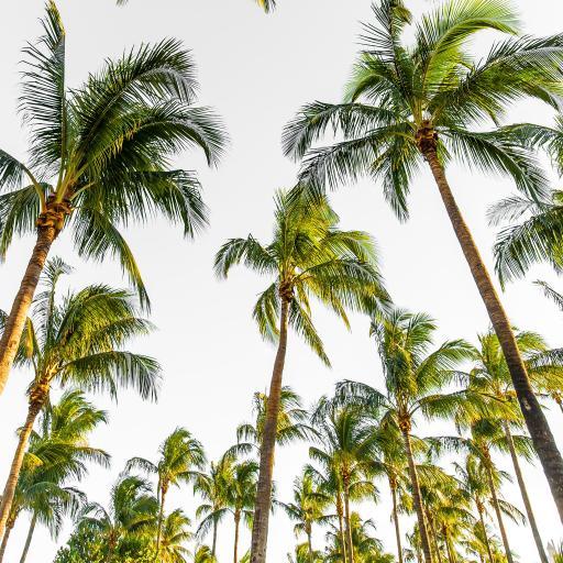 树木 椰树 天空 热带