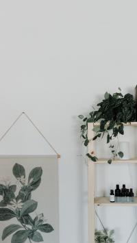 家居 盆栽 绿植 观赏 绿化