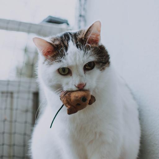 猫咪 宠物 花猫 玩具 布偶