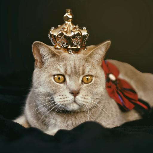 猫咪 宠物 皇冠 服饰