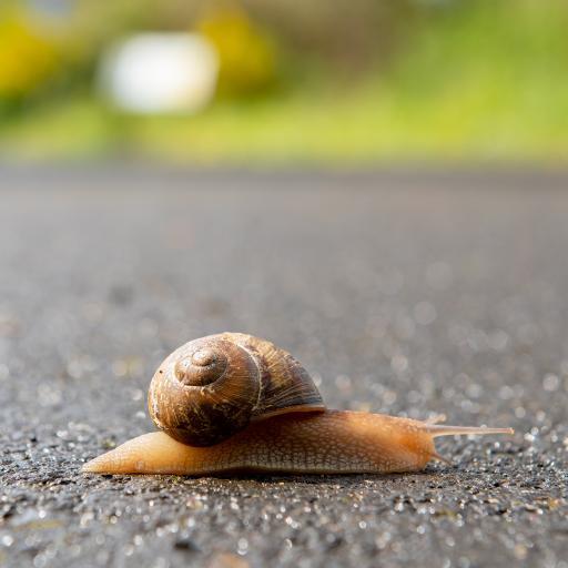 蜗牛 爬行 蠕动 软体