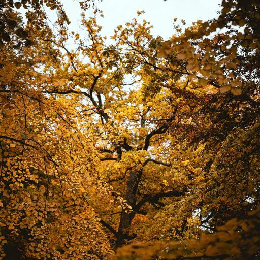 树木 枝叶 黄叶子 茂密