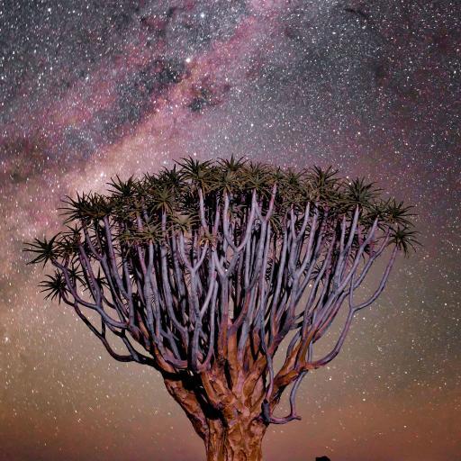 夜晚 星空 树木 梦幻